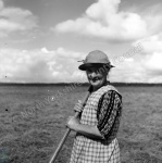 Haymaking, Mrs Benny Simpson, Summerbridge